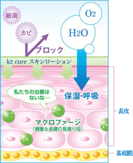 k2 cureスキンローション お肌への働きかけ
