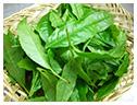 緑茶(チャ葉エキス)